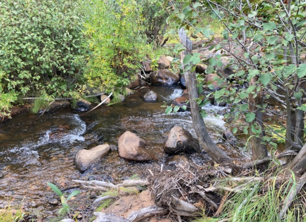 water moving through a small stream